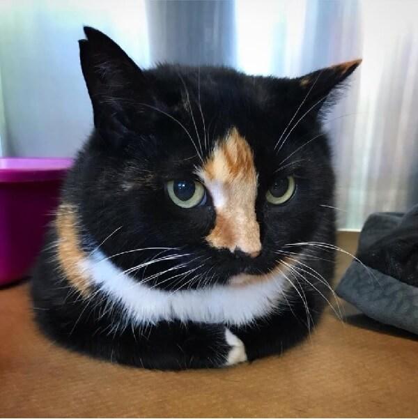 自分の老い先を考えた老女は愛猫を安楽死してもらうために動物病院を訪れた…その結果、愛猫の未来へとつながった!