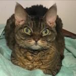 可愛がってくれた飼い主さんが目の前で亡くなり、固く心を閉ざして攻撃的になった5歳の猫。1枚の写真が運命を変えた