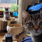 1年前里親を始めたばかりのカップルに救われたとても内気な子猫。1年後に自分と同じ境遇の子猫と親友になって・・・
