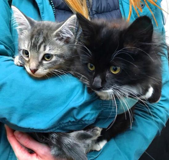 冷たい外の通りで衰弱して見つかったやせ細った子猫。1か月後に再会を果たした妹をギュッと抱きしめて・・・