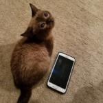 生後2か月で体重113グラム、体長13センチだったとても小さな子猫。7人の獣医師に安楽死を薦められたけれど・・・