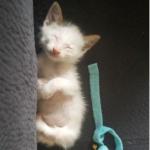 栄養失調の母猫から生まれた6匹の子猫。たくましく優しく成長した一番小さく生まれ後ろ足に障害を抱えた子猫