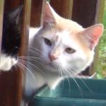 半年後の危機?!目の前で仲間のオス猫の身繕いをするガールフレンドにショックを隠し切れない私の猫