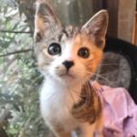 突然現れたひとりぼっちの子猫を温かく迎えた11匹の猫が暮らす家。大きな猫たちに愛された2か月後・・・