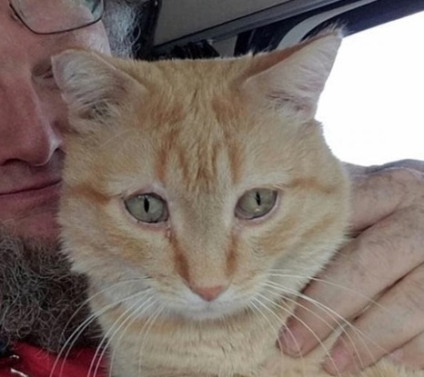 運送中のトラックから突然姿を消した愛猫。24時間探したが見つからず諦めていたところ640km先でまさかの再会!