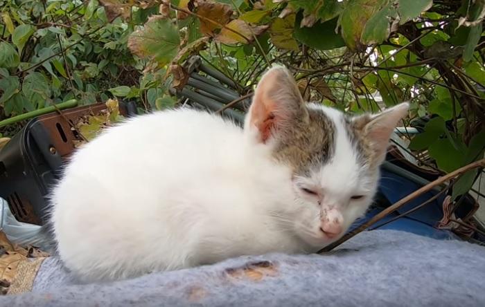 やっぱり天使♡眠くて仕方がない野良の子猫ちゃん。カメラが気になるけど…そんなの関係な~い?子猫ちゃんが可愛すぎる!