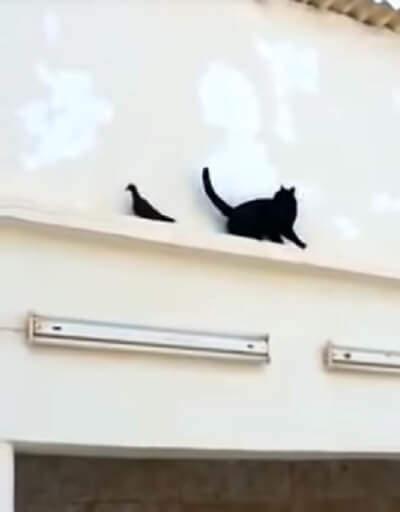 ハトを捕獲しようと背後から近づく猫さん。気配に気づき逃げるハトさんにとった行動がカッコイイ?!