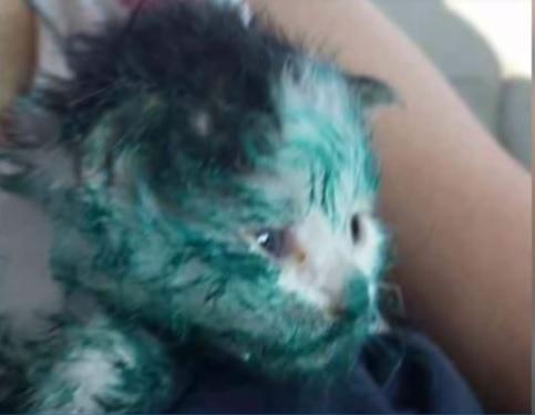 驚愕!ペンキまみれの男性に抱えられた緑色に染まった子猫。突然ハンバーガーショップへ駆けこんできた結果…