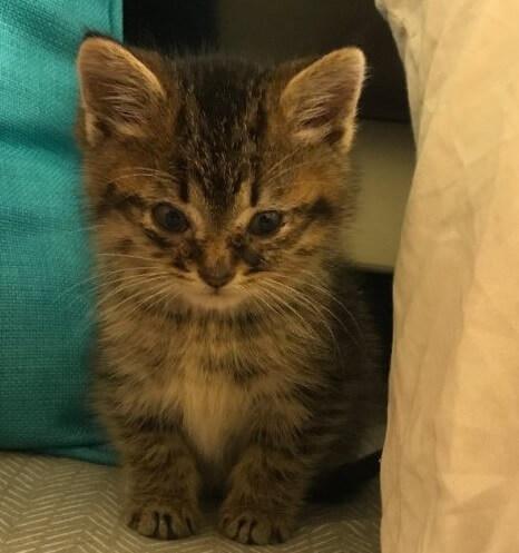 深夜、レストランの換気扇で鳴いていた子猫。保護しようとすると体中の力を振り絞り威嚇して抵抗してきた結果…