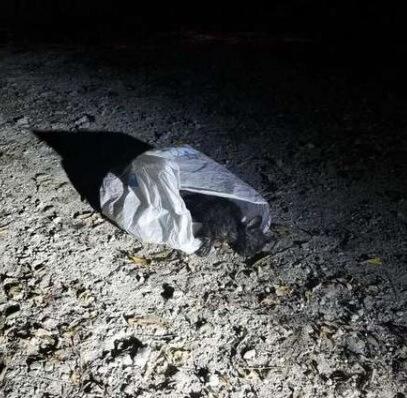 パトロール中の警察官が公園で見つけたゴミ袋に入っていたものは…なんと目や耳から血を流し、衰弱状態の小さな子猫だった!