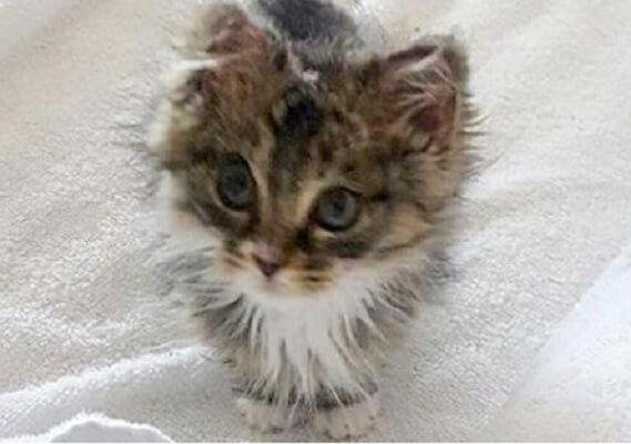 火事の中で重傷を負いながらも必死で生き延びた子猫。3日後に心優しい夫婦に保護され幸せを掴む!