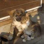 とっても仲良しな猫とワンコ。ふたりでまったりと日向ぼっこしていると…一緒に寝落ちする様子にほっこり♡