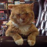 いつも不機嫌そうで数年間施設にいた老猫。本屋さんに引き取られたおかげで生活が一変しお店の顔になる!