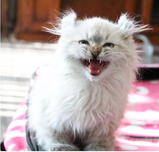 かつて獣医師に安楽死を薦められ苦難を乗り越えた猫。前足が変形した小さな子猫に愛情を注いで永遠の家へ送り出す