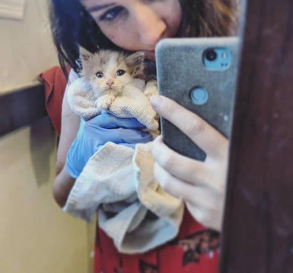 通りから救われた瀕死の子猫が懸命に看護にも拘らず苦しみ続けた初めての夜。奇跡の回復をみせた2か月後