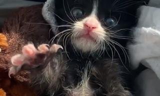 ゴミ袋に入れられ公園に捨てられていた3匹の小さな子猫。獣医師が3日と生きられないと安楽死を薦めた瀕死の子猫の2か月後