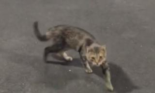お世話をしている野良猫のコロニーで食事の時間になると姿を見せる猫。フレンドリーには見えなかった猫は外の暮らしに背を向けて・・・