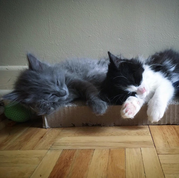 田舎道に捨てられていた衰弱した子猫とシェルターに収容された衰弱した子猫。ひとりぼっち同士の子猫が出会ったら・・・