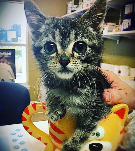 動物病院へ連れてこられた生後2日の小さな子猫。問題を抱えながら決して諦めない子猫を支えた女性との1年半