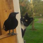 ベランダに置いた本物そっくりなカラスに人生を考えた隣人の猫。意気揚々と自宅に戻った猫に待ち受けていた意外な結末