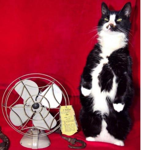 野良猫が残した小さな子猫を家族に迎えたら・・・オークションサイトの出品写真でひときわ存在感を放つタキシードの猫
