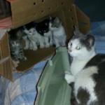 4年前、警戒心の強い野良猫に冬の間ずっと食事を与えていた兄弟のもとへ、ある日野良猫が大事な子猫達を連れてきた