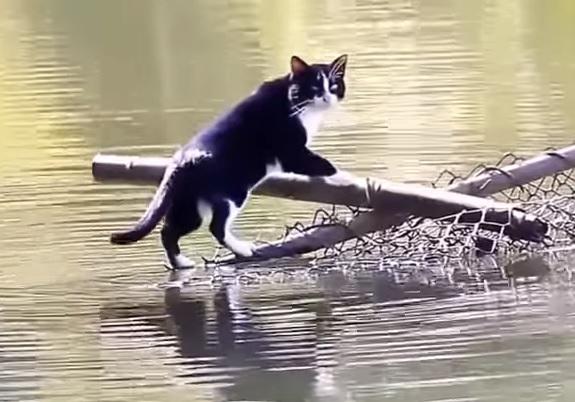 溺れるんじゃ…猫さん大ピンチ?!と思いきや難なく乗り切るとってもワイルドな猫さんに拍手!