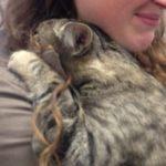 「行かないで!」保護施設を去るボランティアさんに抱きついて離れようとしない猫。予想外の行動に感涙…