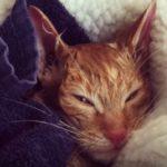 玄関のポーチで凍死寸前の瀕死状態で発見された猫。保護した家族の懸命な看護に感動!そして命は繋がれた!