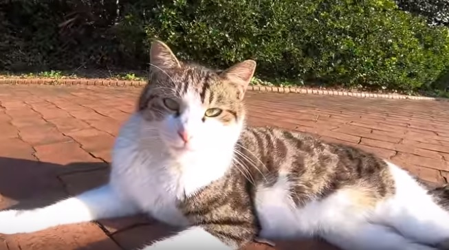 偶然出会った野良猫たち。ぞろぞろ何処かに向かい歩く彼らについて行くとナント!猫集会だった…超感激!
