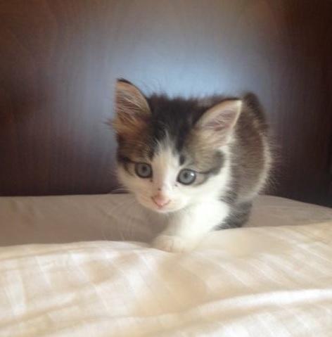 警備員室に突然やってきた汚れてしっぽの曲がった子猫。猫好きの男性に保護された結果、幸せいっぱいの生活が待っていた!