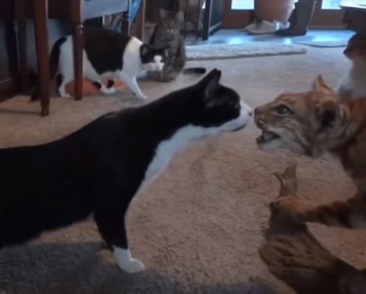 とんだハプニング?!賢い猫たちが予想外の出来事に驚きを隠せない…ってか、チョーびっくらこいたにゃ!!