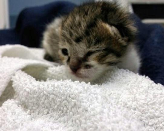 農場の片隅で生まれた日に取り残されたひとりぼっちの子猫。大きな鳴き声で救いを求めたおかげで心優しい人に出会った結果…