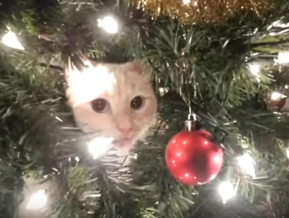 世界中がうっとり愛して止まないクリスマスツリー♪にゃんこたちも興味津々で大騒ぎ!ア・イ・シ・テ・ル?!