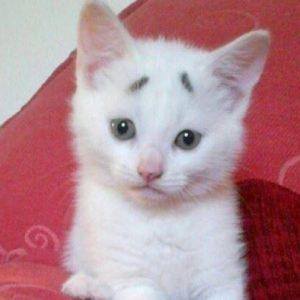 いつも困ったような顔が可愛い子猫。その愛嬌たっぷりの顔でおねだりされると誰も断ることができなくて…
