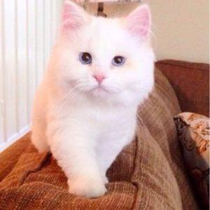 発見されたときボロボロで動けなかった子猫。保護されキレイにしてもらうと見違えるほど美しい猫へと…まるでマリーちゃん?!