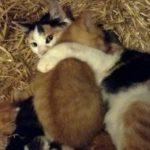 母猫とはぐれて独りぼっちの子猫。迷い込んだ納屋の中で愛情いっぱいの幸せそうな猫親子に出会うと…