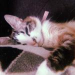 クリスマスの朝星になった親友の姿を探すもう1匹の猫。親友の毛束に見せたリアクションが話題に