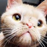 1年以上前、自宅の納屋で子育てを始めた野良猫。母猫と子猫達全てにあたたかい家族を見つけた家族