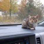 『子猫がずっと鳴いているけどどこで鳴いているのか分からないの』雨が降る保育園の駐車場で助けを求めていた子猫