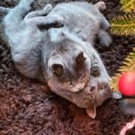 野良猫のコロニーで見つかった決して離れようとしない2匹の子猫。同じ先天的疾患を抱え困難と闘う2匹が見つけた永遠の家