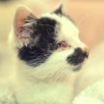 2匹の子猫を引き取りに行ったシェルターでケージの中で泣いている盲目の子猫が気になって・・・子猫の運命を変えた出会い