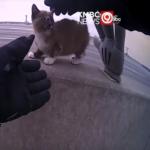 高速道路の中央分離帯に小さな子猫が立ち往生。救助に向かう警察官を助けた意外なものとは?