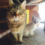 引き取り手を探している子猫に会いに行ったらママ猫の面接を受けた。あれから2年半・・・