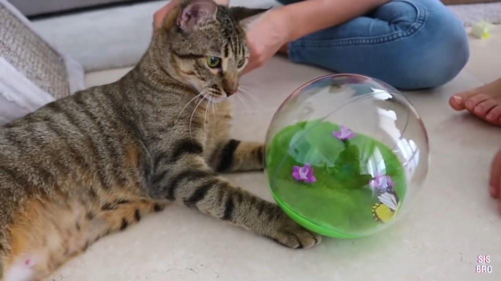 海外の猫用オモチャって?猫たちの反応は?全11個をご紹介!
