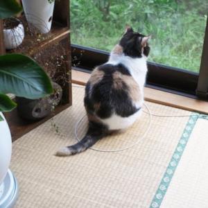 同じ場所にずっと座っている猫が気になった。足元に猫がそこでなければならないなにやら秘密が・・・あった