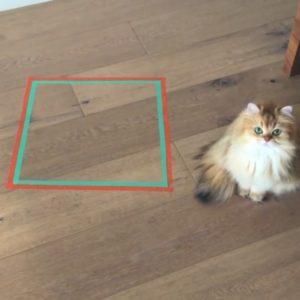 """「テープの囲いをつくると、猫が入る」という噂は本当???飼い主が試してみました!""""猫ホイホイ実験""""の驚きの結果がここに!"""