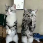 可愛い&面白い!個性豊かな猫ちゃん達の動画集♡