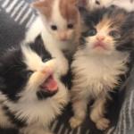 ゴミ箱に捨てられ身を大きな声で泣き叫んでいた4匹の子猫。空腹と恐怖の中でお互いを慰め合い助けを待っていた