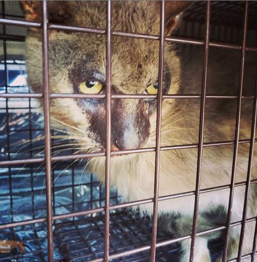 住宅地に姿を見せるという野生の猫。住人の通報に駆けつけた救助者が発見したのは『・・・猫?』